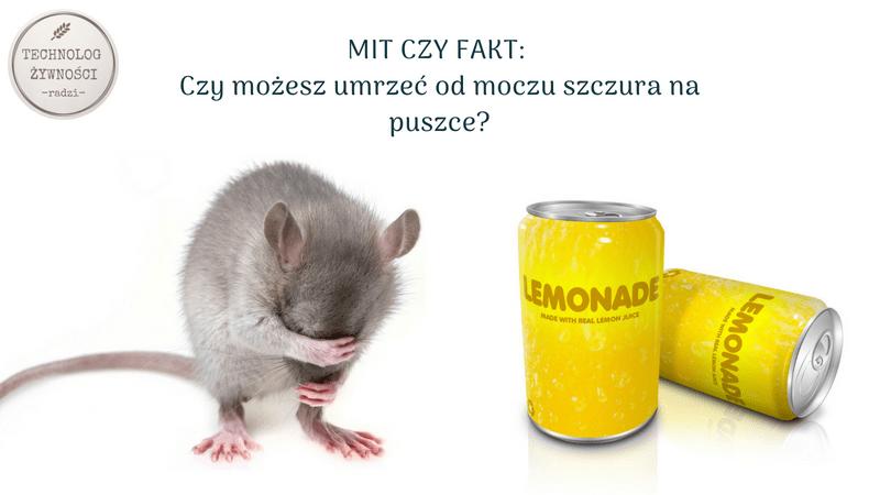 mocz puszki szczury leptospiroza